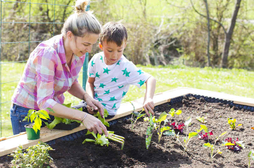 Mother and her son planting seedlings in the raised bed in her garden