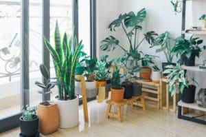 Various Indoor plants put in the planter