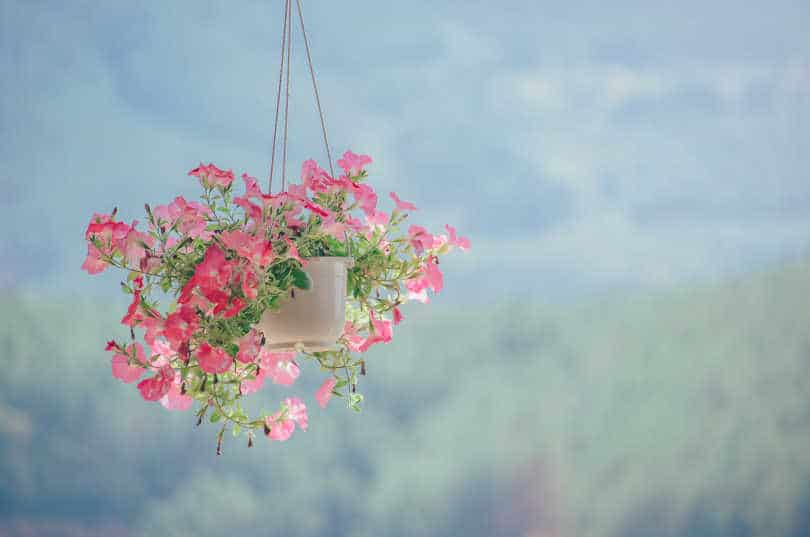 Colorful Flowers in Outdoor Hanging Planter