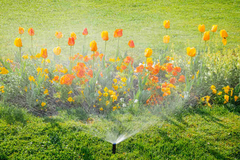 Irrigation system water sprinkler working in garden