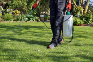 Gardener spraying weed killer on the lawn
