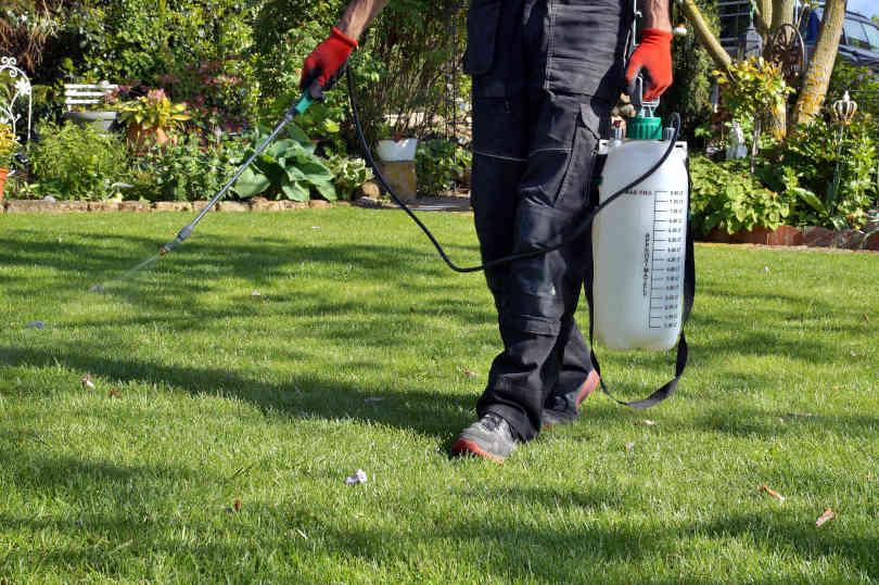 Gardener spraying weed killer on the lawn