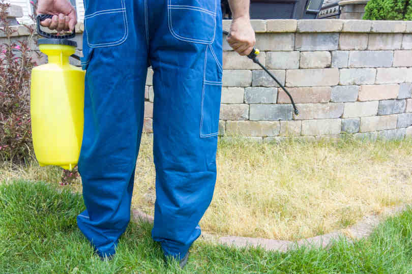 Gardener spraying a patch of grass with weed killer using a portable sprayer