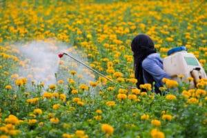 Gardener spraying pesticides in the flower garden with backpack sprayer