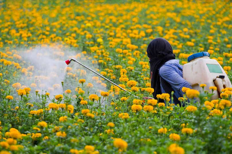 Gardener spraying pesticides in the flower garden with backpack sprayer