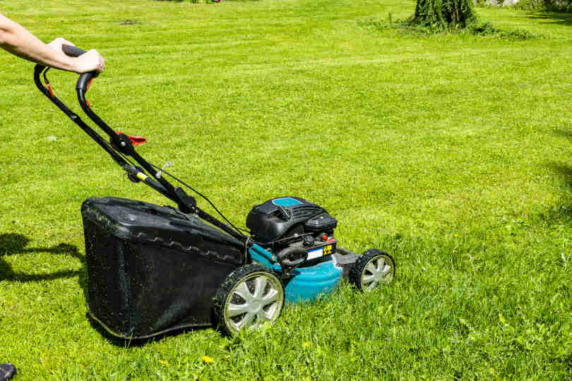 Gardener mowing green grass with lawn mower