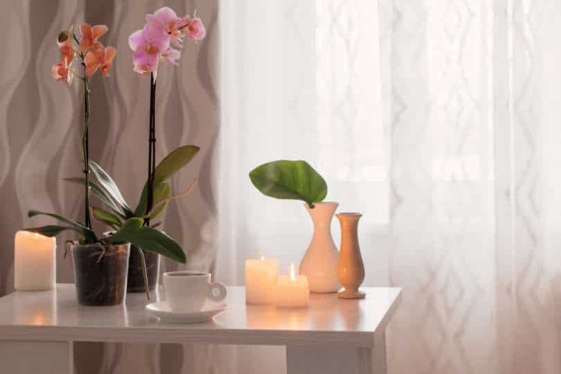 Orchids, cup, candles on the table in the room
