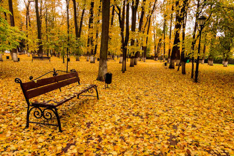 Leaf fall in the park in autumn with bench.