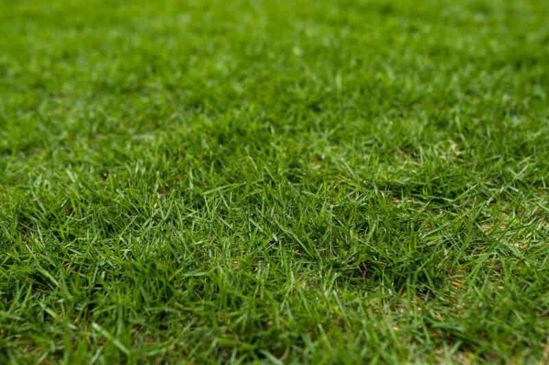 Green lawn on ground