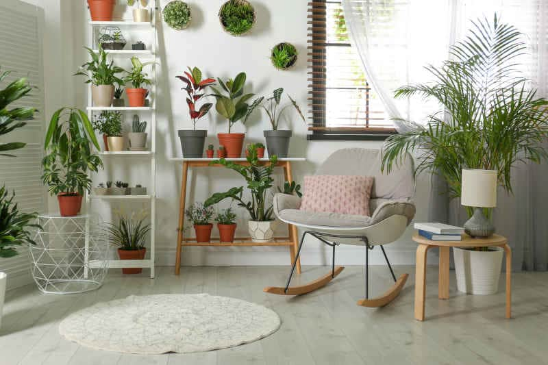 Stylish room interior with different home plants on hanging plant stand